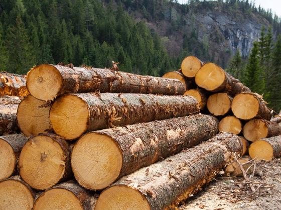 A fost lansată o aplicaţie de mobil prin intermediul căreia utilizatorii din România pot ajuta la descoperirea tăierilor ilegale de păduri