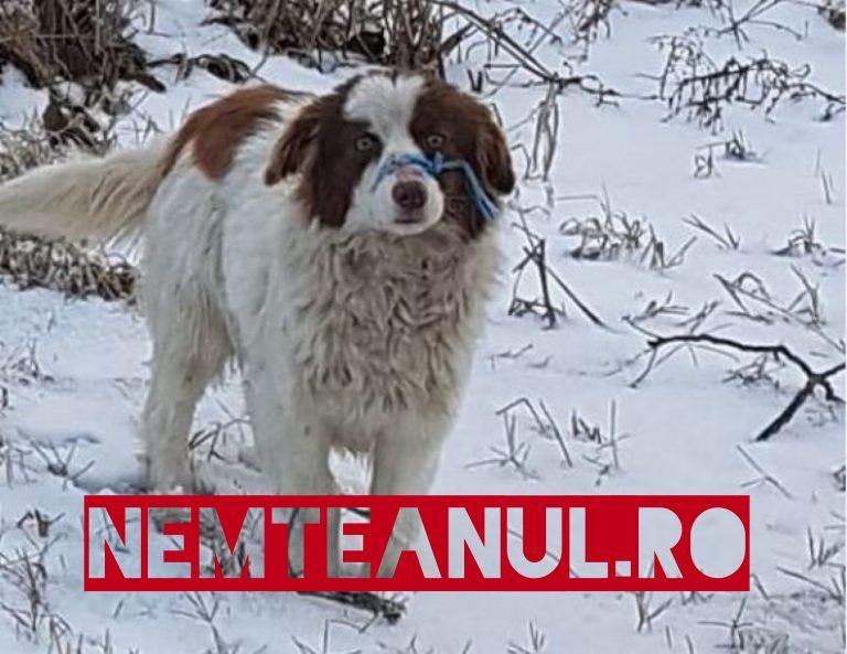 Oameni fără milă ,  într-o localitate din Tulcea a fost găsit un câine legat la gură și abandonat pe câmp .
