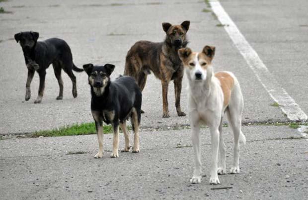 ONG urile straine au hotarat: in Targu Neamt nu se mai pot strange cainii maidanezi de pe strazi