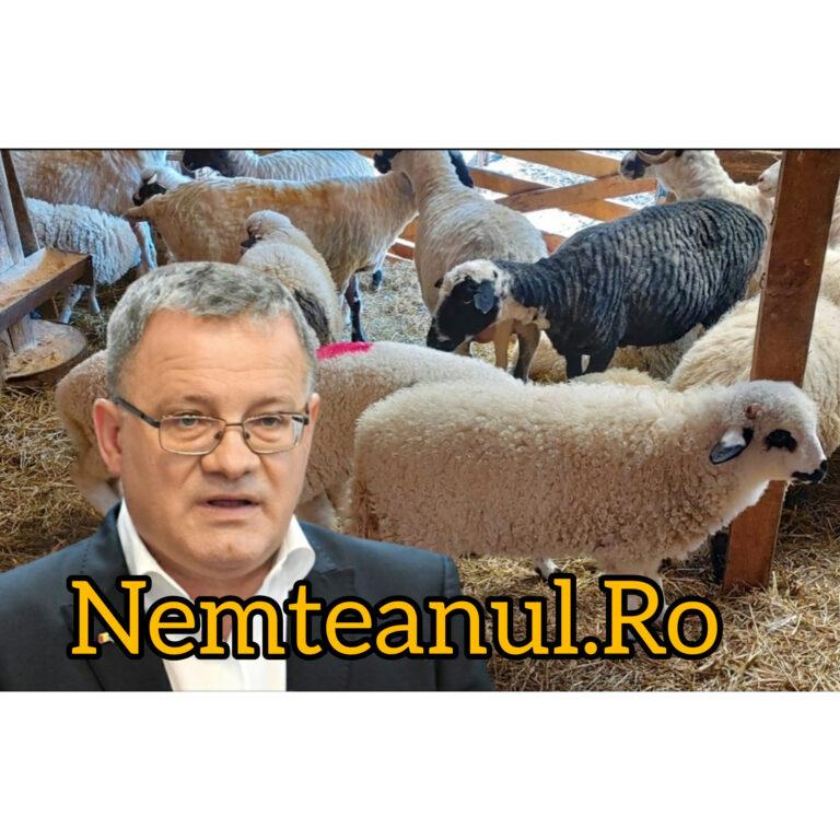 Oros distruge FERMIERII: DSVSA interzice vânzarea cărnii de la mieii sacrificați la stână sau în gospodărie